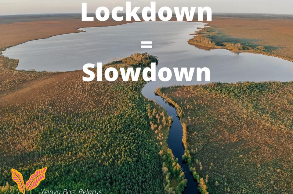 Lockdown=Slowdown